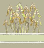 Dekorative Mustereinladung mit Irisblumen, Stockfotos