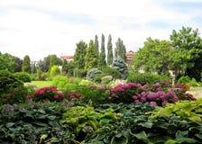 Dekorative natürliche Gartenlandschaft des Fotos während des Sommers, der im botanischen Garten blüht Stockfoto