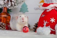 Dekorative nette Ratte auf einem Hintergrund von Weihnachtsdekorationen Stockbild