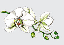 Dekorative Orchideenblumenniederlassung Stockfotos