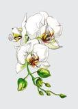 Dekorative Orchideenblumenniederlassung Lizenzfreie Stockfotos