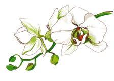 Dekorative Orchideenblumenniederlassung Lizenzfreies Stockfoto