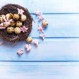 Dekorative Ostereier im Nest und in den zarten rosa Blumen Lizenzfreies Stockfoto