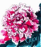 Dekorative Pfingstrosenblumenpostkarte Stockfotos