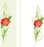 Dekorative Ränder mit Rot stiegen Stockfotografie