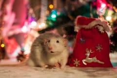 Dekorative Ratte auf einem Hintergrund von Weihnachtsdekorationen lizenzfreie stockfotografie
