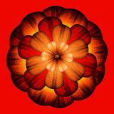 Dekorative rote Blume Stockfoto