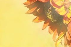 Dekorative Sonnenblume auf gelbem undeutlichem Hintergrund Lizenzfreie Stockfotos