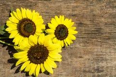 Dekorative Sonnenblumen auf dem hölzernen Hintergrund lizenzfreie stockfotos