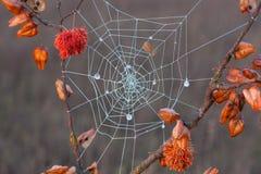 Dekorative Spinne Lizenzfreie Stockbilder