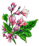 Dekorative tropische Zitronenzitrusfruchtblumen in der Blüte Lizenzfreie Stockfotos