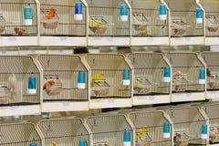 Dekorative Vögel im Käfig auf Ausstellung Stockfotos