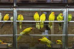 Dekorative Vögel im Käfig auf Ausstellung Stockfoto