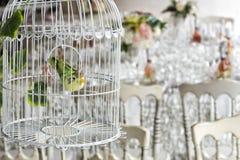 Dekorative Vögel und Käfig auf weißer Tabelle lizenzfreies stockfoto