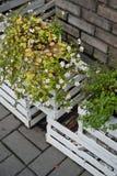 Dekorative weiße Blumen in den Kästen auf der Straße Lizenzfreie Stockbilder