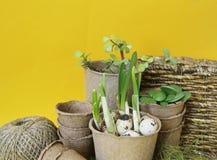 Dekorative Zusammensetzung Ostern auf einem gelben Hintergrund Nest mit Wachteleiern Stockfotografie
