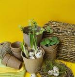 Dekorative Zusammensetzung Ostern auf einem gelben Hintergrund Nest mit Wachteleiern Lizenzfreie Stockfotografie