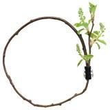 Dekorativer Aufbau des Kreises vom Zweig Stockfoto