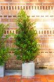 Dekorativer Baum im Haus oder im Arbeitsplatz Lizenzfreies Stockbild