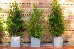 Dekorativer Baum im Haus oder im Arbeitsplatz Stockbilder