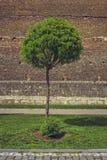 Dekorativer Baum und mittelalterliche Backsteinmauer Stockbilder