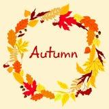Dekorativer bunter Herbstlaubrahmen Lizenzfreies Stockbild