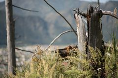 Dekorativer hölzerner Baumstumpf im Wald stockfoto