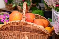 Dekorativer Herbstkürbis Lizenzfreie Stockfotos