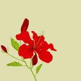 Dekorativer Hintergrund mit Hibiscusblumen Stockfotos
