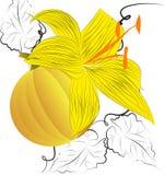 Dekorativer Hintergrund mit Kürbis Lizenzfreies Stockbild
