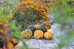 Dekorativer Kürbis auf dem hölzernen Hintergrund umgeben durch Blumen Stockfotografie