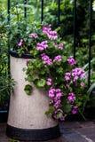Dekorativer Kamin-Topf mit Pelargonien lizenzfreies stockfoto
