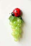 Dekorativer Marienkäfer und eine Weintraube Stockbild