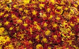 Dekorativer mit Blumenhintergrund, Teppich der gelben Ringelblume blüht Lizenzfreies Stockbild