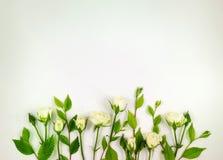 Dekorativer Rahmen mit leichten weißen Rosen auf weißem Hintergrund Flache Lage Lizenzfreies Stockbild