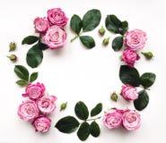 Dekorativer Rahmen mit Rosen und Blättern auf weißem Hintergrund Stockbild