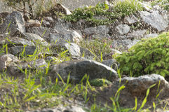 Dekorativer Stein der Tanne Stockbild