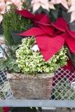 Dekorativer Weihnachtsbehälter Stockbild