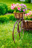 Dekorativer Weinlese-Modell-Old Bicycle Equipped-Korb-Blumen-Garten Lizenzfreie Stockfotografie