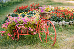 Dekorativer Weinlese-Modell-Old Bicycle Equipped-Korb-Blumen-Garten foto stockbilder