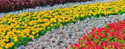 Dekoratives Blumenbeet Lizenzfreie Stockfotografie