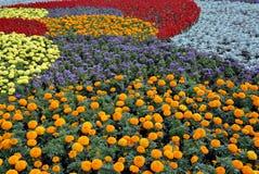 Dekoratives Blumenfeld Lizenzfreie Stockfotos