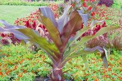 Dekoratives Gemüse Lizenzfreies Stockbild