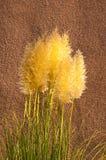 Dekoratives Gras und luftgetrockneter Ziegelstein Lizenzfreies Stockfoto