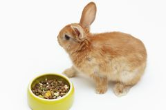 Dekoratives Kaninchen mit einer Schüssel trockener Nahrung auf weißem Hintergrund stockfoto