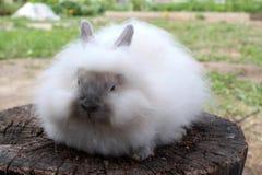 Dekoratives Sitzen des sehr flaumigen weichen lustigen Kaninchens auf einem Klotz stockfotografie