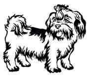Dekoratives stehendes Porträt von Hund-shih-tzu, Vektor lizenzfreies stockfoto