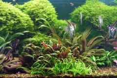 dekorativt akvarium Arkivbild