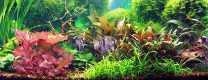 dekorativt akvarium Royaltyfri Fotografi