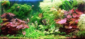 dekorativt akvarium Royaltyfri Bild